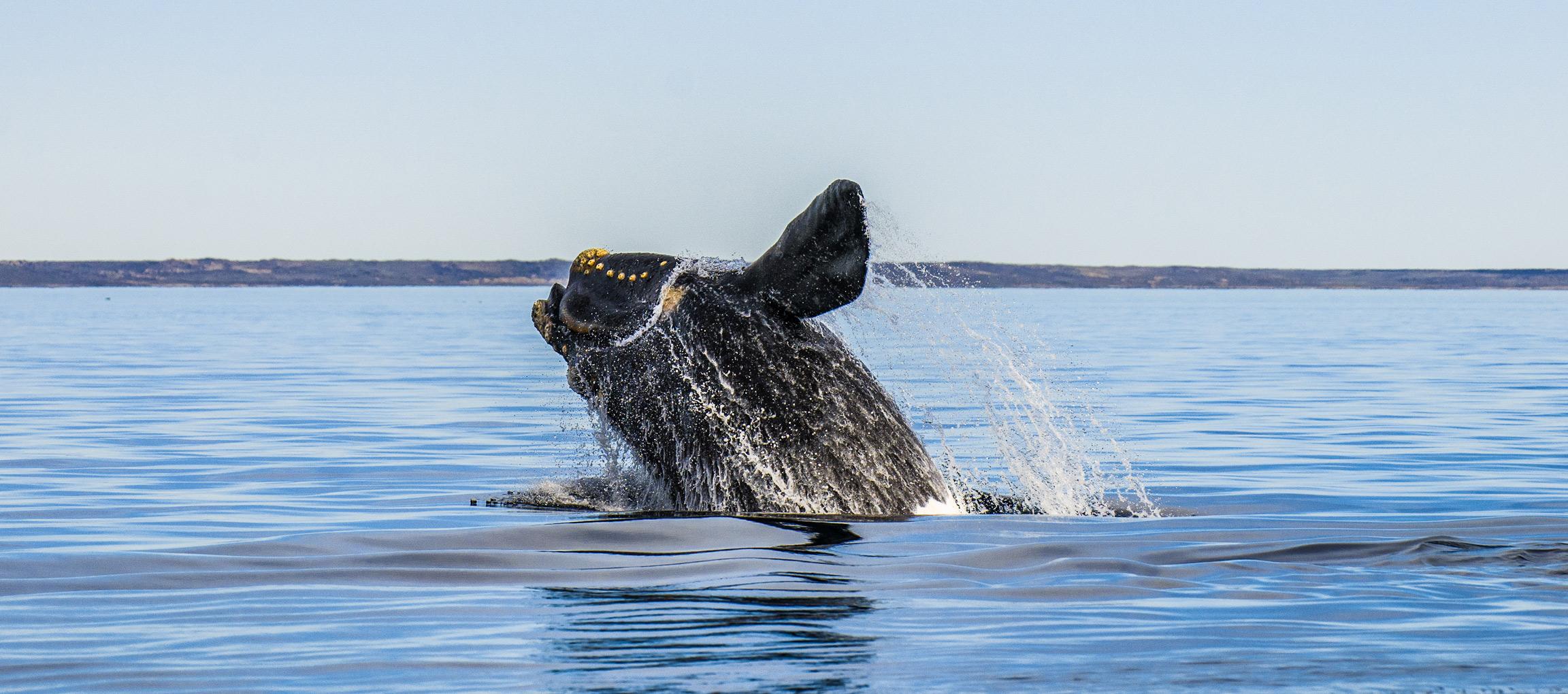 Voir des baleines