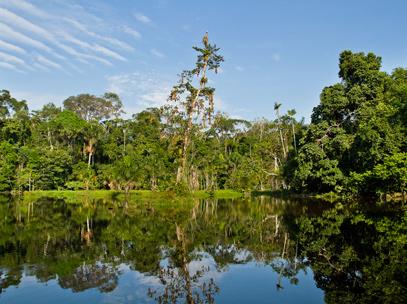 Croisière Rio Napo - Forêt Equatorienne