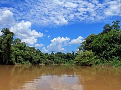 Croisière Rio Napo - Parc National Yasunirc
